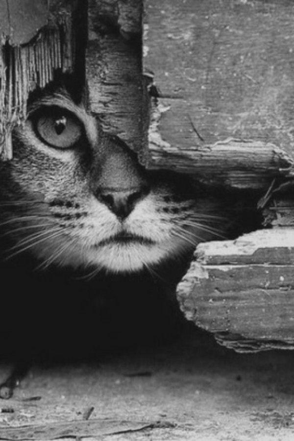 Photo en noir et blanc voyager en solo - Tapis geometrique noir et blanc ...
